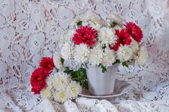 Free Still Life Of White And Red Flowers Of Chrysanthemums On A White Network Background Royalty Free Stock Photo - 148602815