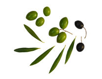 Still Life with olives. Green and black olives with olive leaves isolated on white stock photography
