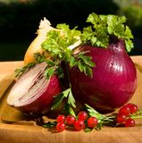 Still life with onion Stock Images