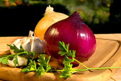 Still life with onion Stock Image