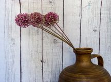 Still life of onion flowers in jar with white wooden wall. Flowers pink magenta stock photography