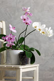 Still life with orchids Stock Photography