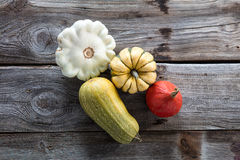 Still life of organic cucurbitaceae, kuri squash and green gourd Stock Image