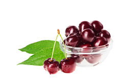 Still life with pair of red wet cherry fruit Royalty Free Stock Image