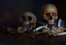 Still life of pair of skul. L and bone Royalty Free Stock Image