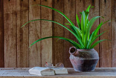 Still life pandan in old pot and old book. On brown background Stock Photo