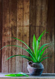 Still life pandan in old pot and old book. On brown background Royalty Free Stock Images