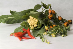 Still life with peppers and wild rose Royalty Free Stock Images