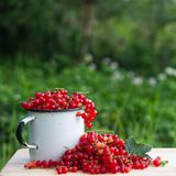 Still-life photo with fresh currant berries on wooden plank for stock photo