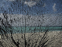 Still life photography of Black coral. Black coral as a pattern on the exotic background with sea, sky, and sand Royalty Free Stock Image