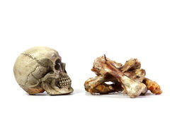 Still life photography concept with skull and bone Stock Photo