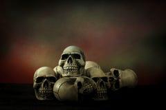 Still life photography with human skull. Still life photography concept with human skull stock photos