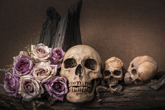 Still life photography with human skull and roses. Still life painting photography with three human skulls and roses on timber background, love and horror Royalty Free Stock Photo