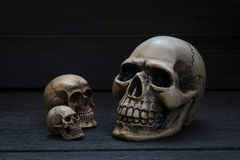 Still life photography with human skull on wood background. Still life photography concept with human skull on wood background royalty free stock photography