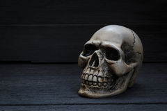 Still life photography with human skull on wood background. Still life photography concept with human skull on wood background stock photo