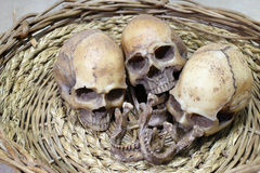 Still life photography with human skulls group Royalty Free Stock Photography