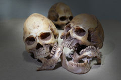 Still life photography with human skulls group Royalty Free Stock Photo