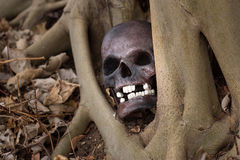 Still life photography, skull on dry leaf at bottom of big Bodhi Royalty Free Stock Photography