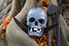 Still life photography, skull on Flame Of The Forest. At bottom of big Bodhi tree ( Bodhi or pho tree is symbols of Buddhism royalty free stock photos