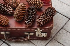 Still life of pine cones and berries of mountain ash on wooden boards, Christmas decorations. stock images