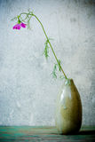Still Life with  pink cosmos flower Royalty Free Stock Photo