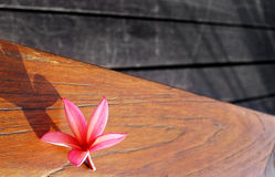 Still life of pink flower on wood patio table Royalty Free Stock Photo