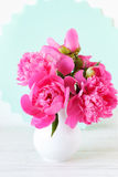 Still life with pink flowers Stock Image
