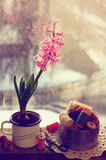 Still life  with pink hyacinth and wooden thread spools Royalty Free Stock Photos