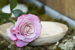 Still life with pink rose on moss ground Stock Photos