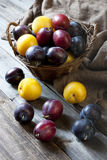 Still life with plums in a basket on the table Stock Image