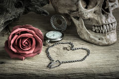 Still life pocket watch. Still life with human skull with red rose bud ,metal chain in heart shape and pocket watch Royalty Free Stock Photo