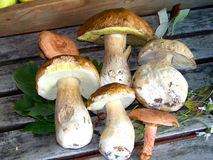 Still-life with porcini mushrooms Stock Photo