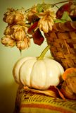 Still life with pumpkin Royalty Free Stock Image