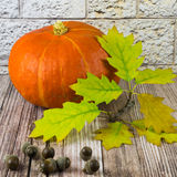 Still life with pumpkin, acorns and oak leaves on wood in front of a wall of sandstone Royalty Free Stock Image