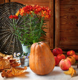 Still life with pumpkin, apples and chrysanthemums Royalty Free Stock Photo