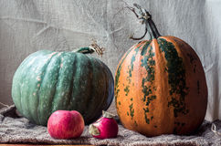 Still life Pumpkin, apples on sackcloth. Still Life. yellow and green pumpkin two red apples on sacking. beige background Royalty Free Stock Photo