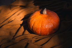 Still life with pumpkin on the background of cozy knitted textur Royalty Free Stock Photos