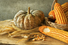 Still Life With pumpkin and corn Royalty Free Stock Images