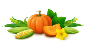 Still life with pumpkin and corn on white background. Fresh harvest for Thanksgiving day. Pumpkin, slice of pumpkin, flower of pumpkin, green leaves of pumpkin Stock Photography
