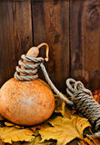 Still life with a pumpkin. Royalty Free Stock Photo