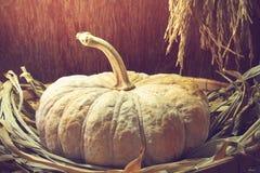 Still life with pumpkin, paddy rice seed, dead Pandan, toned ima Stock Photos