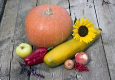 Still life of pumpkin Queen in the day of harvest royalty free stock photos