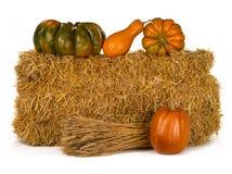 Still life pumpkin royalty free stock images