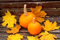 Still-life with a pumpkin in yellow leaves Stock Image