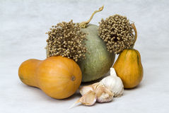 Still life with pumpkins Royalty Free Stock Images