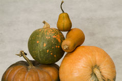 Still life with pumpkins Stock Photography