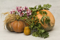 Still life with pumpkins Stock Photo