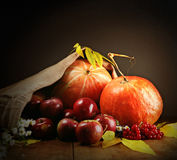 Still life with pumpkins and apples Stock Images