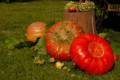 Still life with pumpkins Royalty Free Stock Image