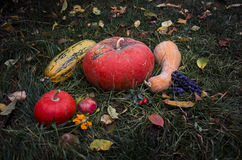 Still life with pumpkins Autumn harvest Halloween on tha grass. Still life with a pumpkins Autumn harvest Halloween on tha grass Stock Images